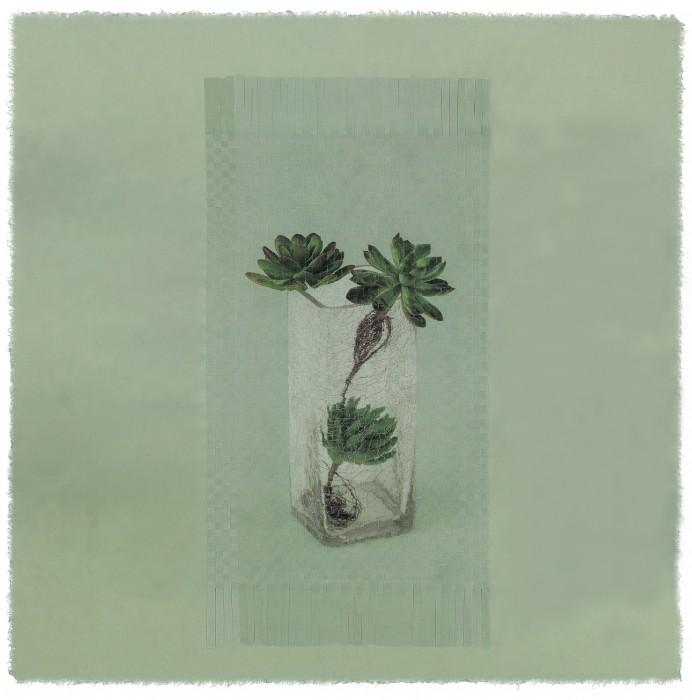 seesaw  rm 11 _ succulent